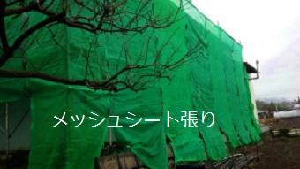 前橋市高花台、庭が広い和風なお宅でメッシュシート張り