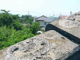 前橋市富士見町袖瓦コケのアップ