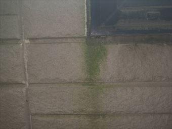高崎市箕郷町M様外壁のコケ