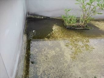 前橋市大胡町店舗屋上排水溝のドロ