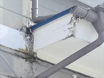 草津町Y様邸雨樋の破損状況