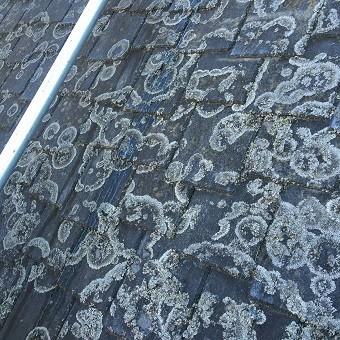 前橋市富士見町屋根洗浄前アップ