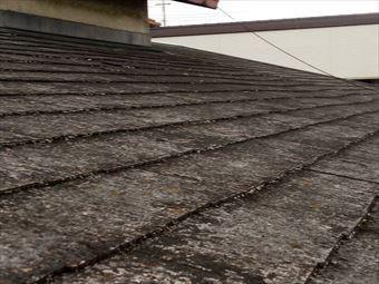 安中市安中屋根のコケ