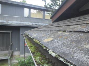 前橋市富士見町別荘雨どいに苔
