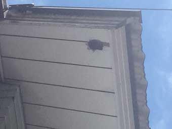 軒下のキツツキの穴