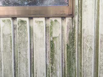 前橋市富士見町K様邸外壁塗装工事苔