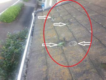 前橋市調査屋根のコケの指摘
