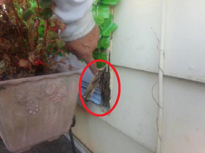 前橋市調査外壁木部の腐食指摘